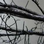 Light Wood: Tree (detail)