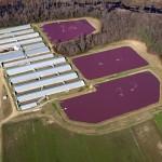 Photo of CAFO in North Carolina, courtesy of Rick Dove, Waterkeeper Alliance